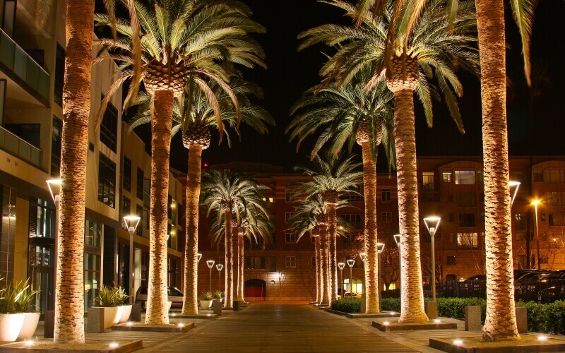 Palm trees decorated with lights in night at San Jose in California